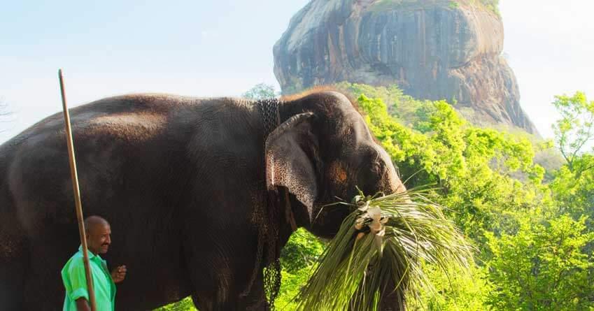 Discover Sri Lankan Heritage
