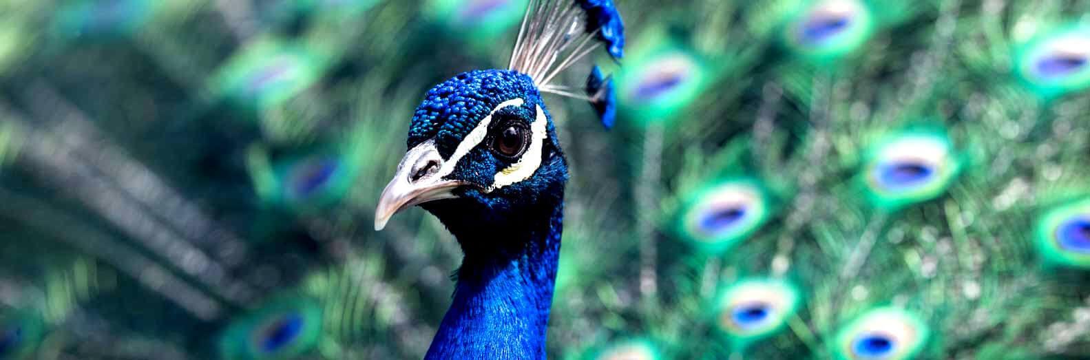 Bird watching at Sigiriya