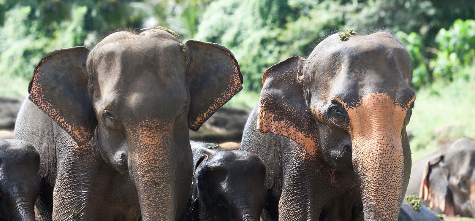 Minneriya National Park Sri Lanka
