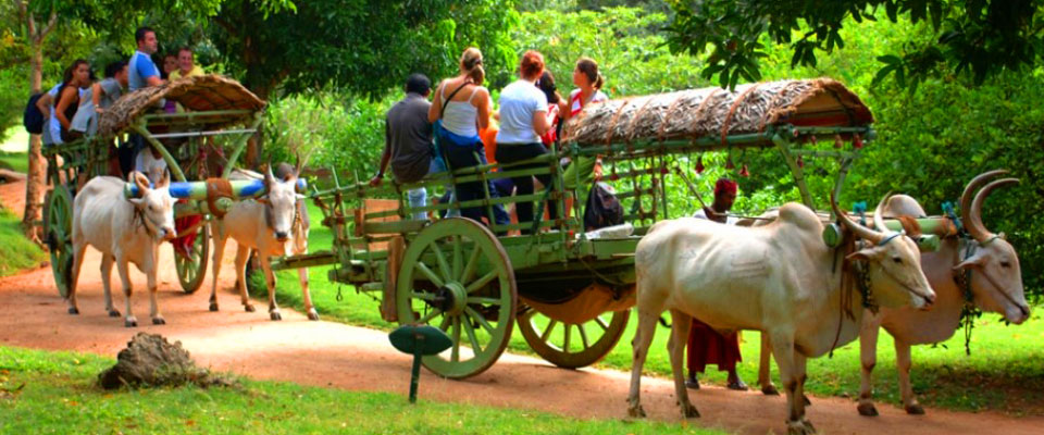 Discover the village life in Sri Lanka