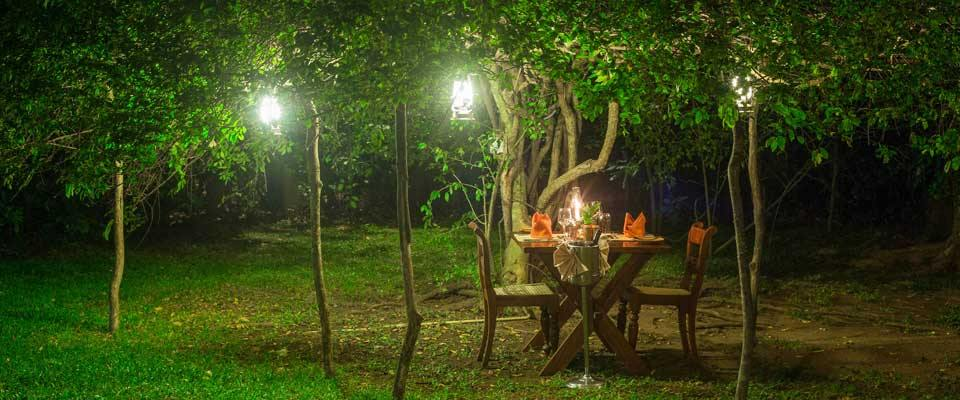 Al Fresco Dining Under the Stars