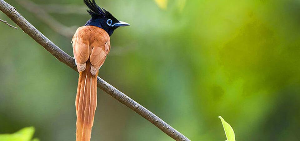 Bird watching at Sinharaja